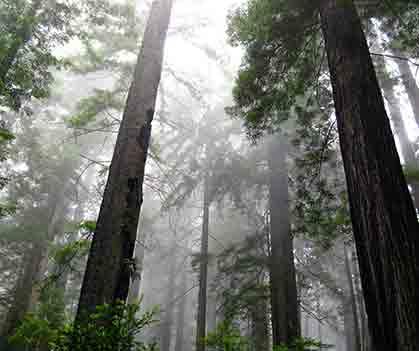Tourism By Trail: Eureka, California