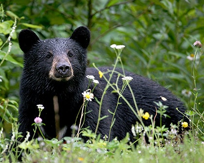 6 Bear Safety Tips for Trail Runners