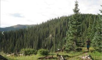 "Trophy Series Photo Contest Winner 5.11.17 - Tze Yong -""Runnin' Ridges in Wheeler Peak Wilderness, Taos Ski Valley NM. Training for the Bull of the Woods Trail Race"""