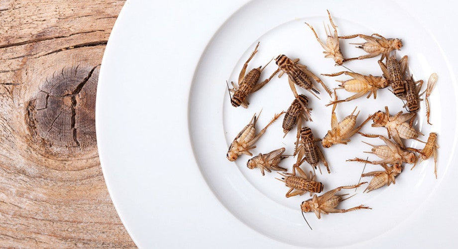 The Latest in Energy Bars: Healthy, Sustainable and ... Made of Crickets