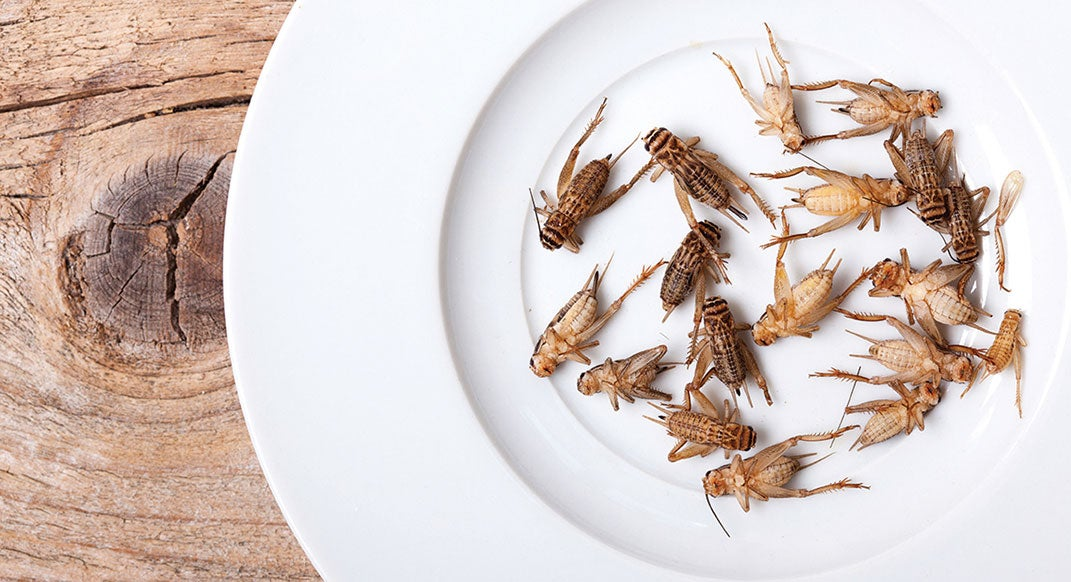 The Latest in Energy Bars: Healthy, Sustainable and … Made of Crickets