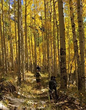 Fall colors at the Deep Creek Trail Half.