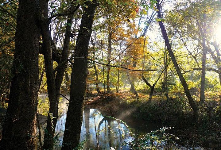The Pinhoti 100 passes through Alabama's beautiful forests.