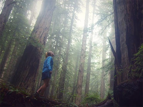 Video: Running Under the Redwoods