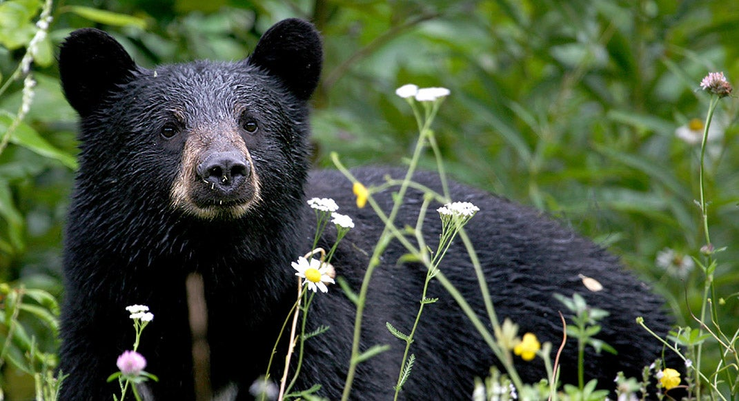 A Trail Runner's Botched Bear Encounter