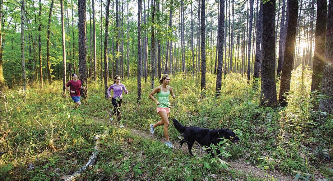 The Urban Trail Runner's Guide